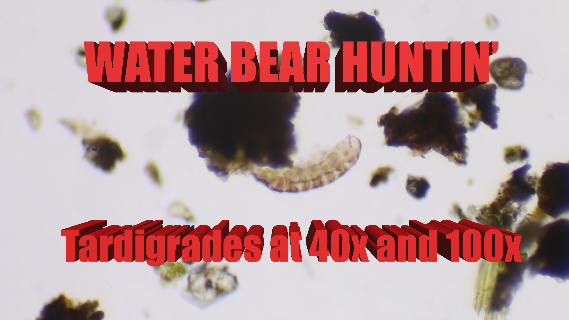 SCIENCE with WATER BEARS! Finding Tardigrades