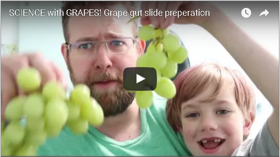 what the heck science with grape guts